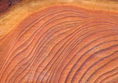 Lärchenholz Muster